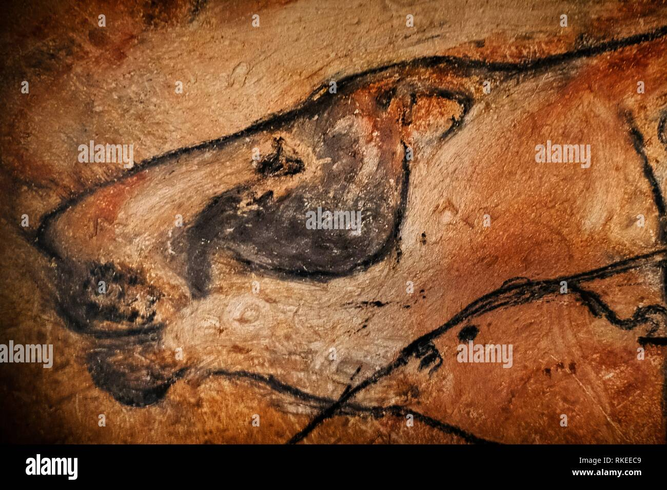France, Ardéche, Lions head: Chauvet Pont d´Arc cave. - Stock Image