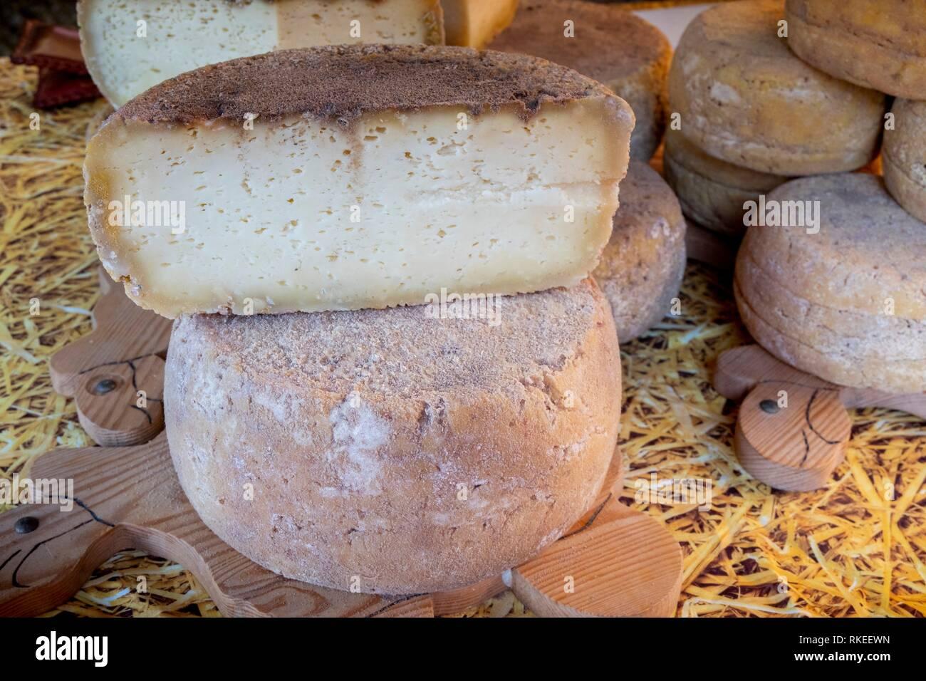 France, Auvergne, Cantal, Sheep milk cheese at Sainte Urcize. Pilgrimage way to Santiago de Compostela. - Stock Image