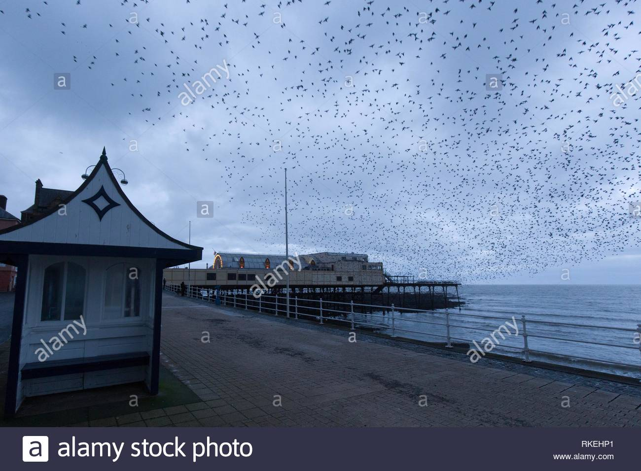 Aberystwyth, Ceredigion, Wales, UK 11th February 2019 UK weather: Cloudy start to the morning in Aberystwyth as the starlings leave their overnight roost from the underside of the Pier. Credit: Ian Jones/Alamy Live News Stock Photo