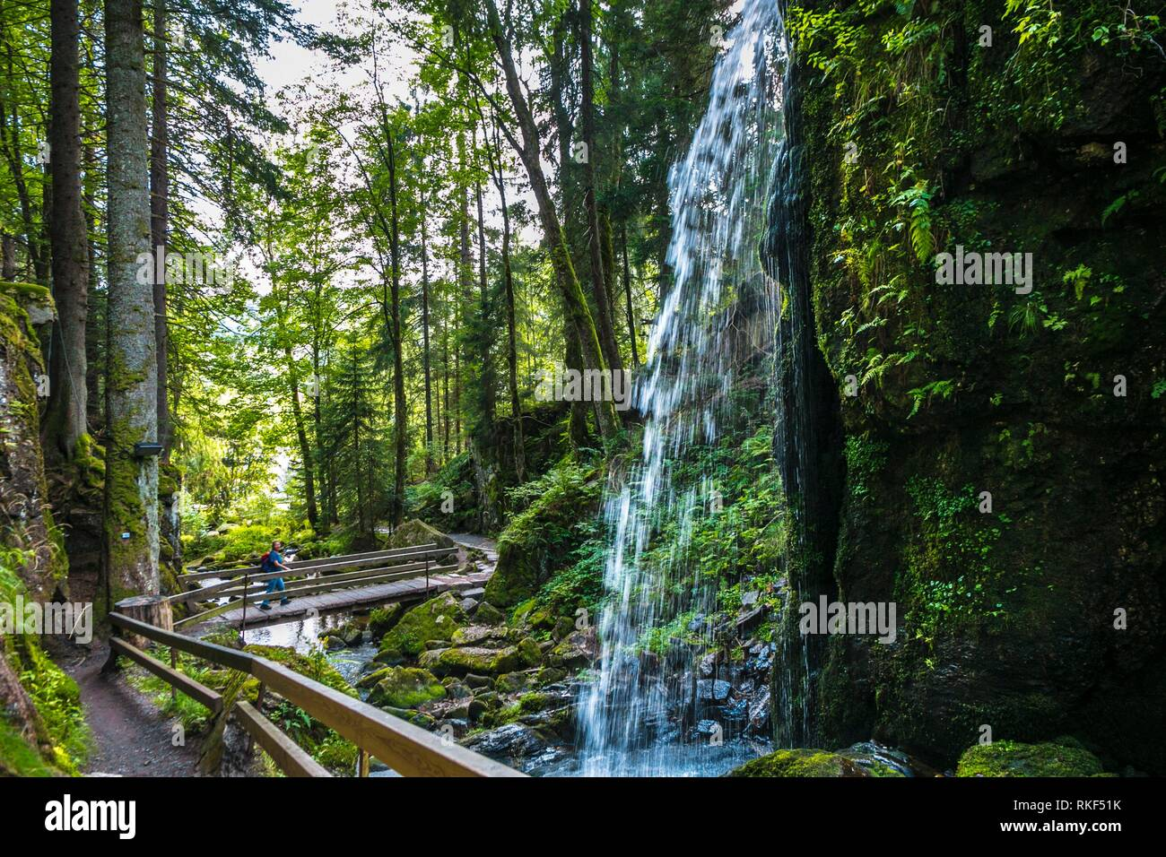 Waterfall. Menzenschwand. Black Forest. Baden Wurttemberg. Germany. Europe - Stock Image