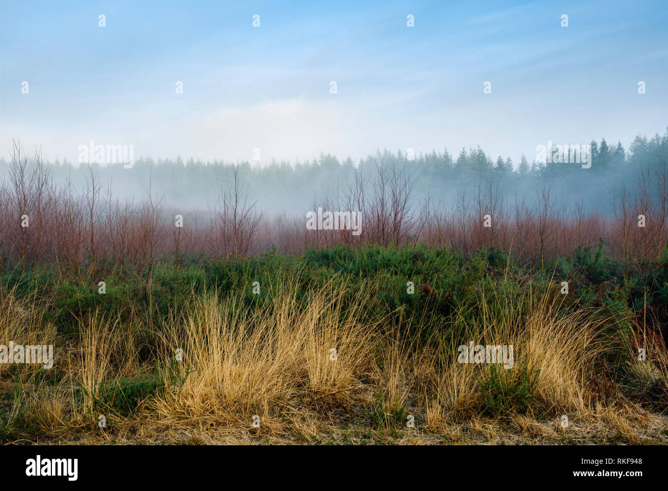 Morning mist over Beacon Hill managed heathland in South Wales. - Stock Image