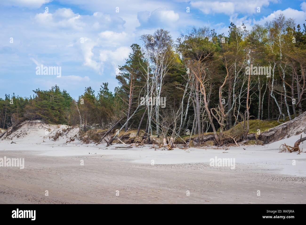 Shoreline erosion in strict protection area of Slowinski National Park on the Baltic coast in Pomeranian Voivodeship, Poland. Stock Photo