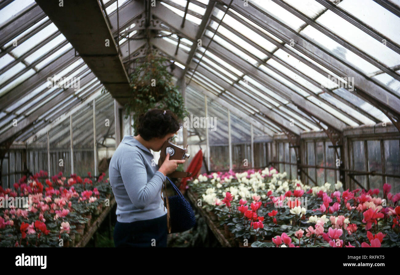 1968, lady with a home movie cine camera standing inside in a greenhouse filming some colourful flowers, England, UK. The use of a small cine or home movie camera to record things was a popular hobby in this era. - Stock Image