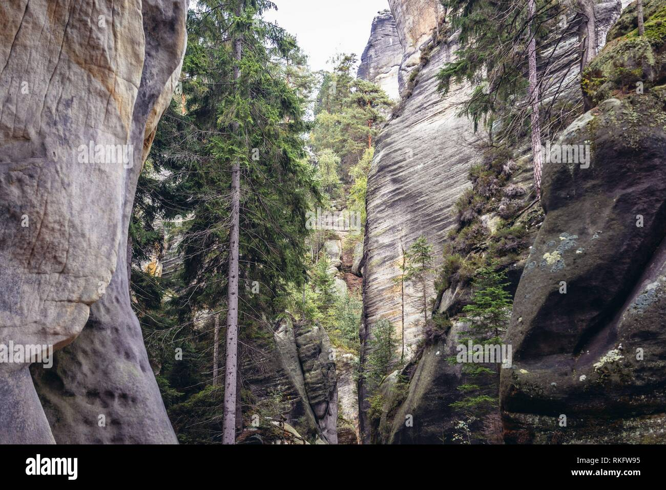 National Nature Reserve Adrspach-Teplice Rocks near Adrspach village in northeastern Bohemia region, Czech Republic. - Stock Image