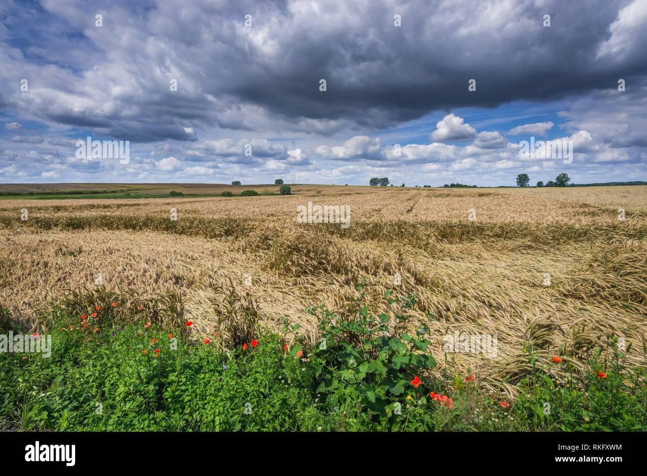 Field in Gryfino County, West Pomeranian Voivodeship in Poland. Stock Photo