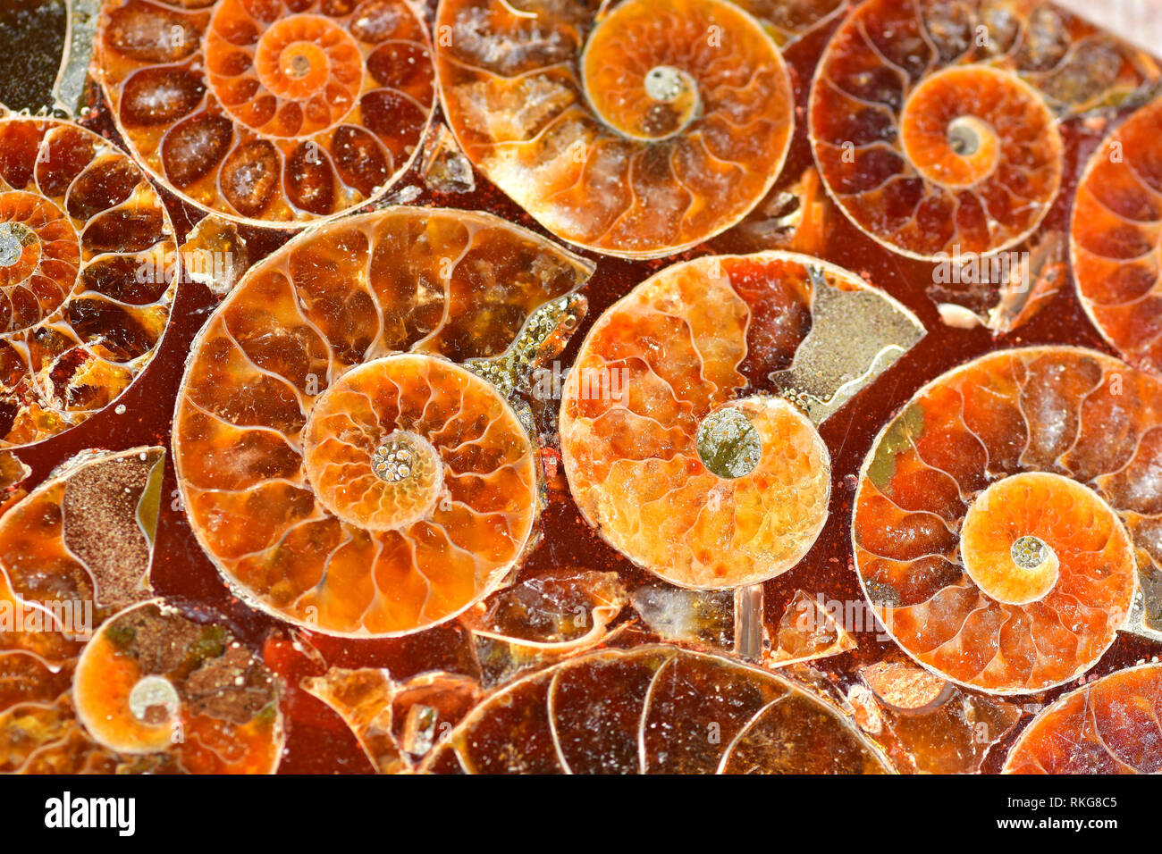 Sectioned Ammonite fossils set in resin Stock Photo
