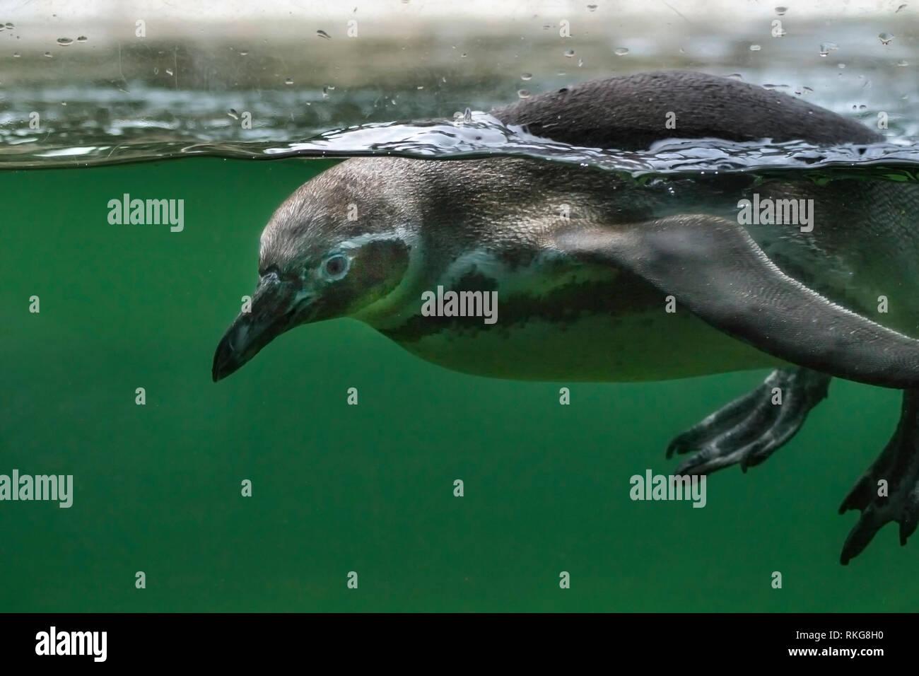 At Marwell Zoo, Southampton, UK - Stock Image