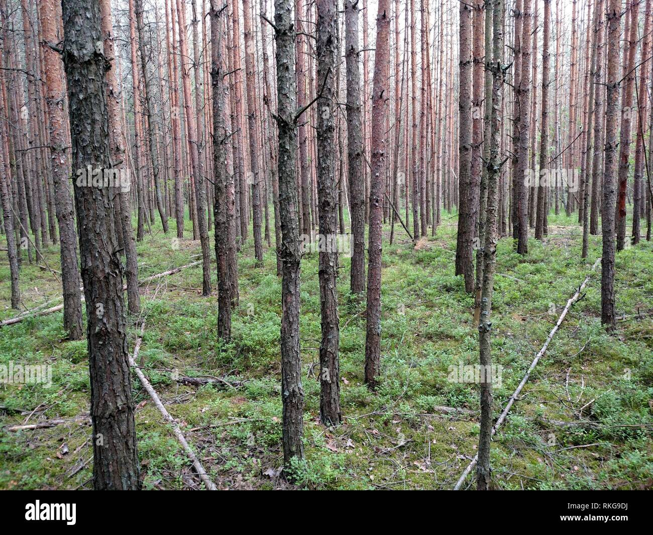 Dark Forest Background Ukraine Forest Trees Background Nature Stock Photo Alamy Tons of awesome dark forest wallpapers to download for free. https www alamy com dark forest background ukraine forest trees background nature image235771918 html