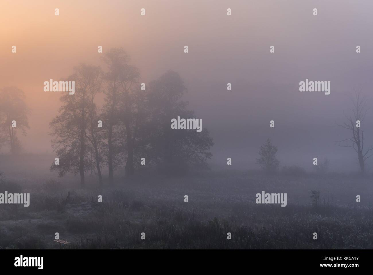 Morning fog in Gorki village, Sochaczew County on the edge of Kampinos Forest, large forests complex in Masovian Voivodeship of Poland. - Stock Image