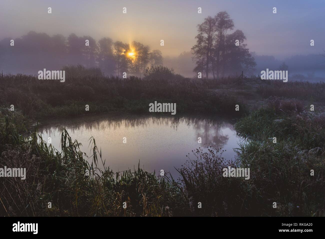 Small pond in Gorki village, Sochaczew County on the edge of Kampinos Forest, large forests complex in Masovian Voivodeship of Poland. - Stock Image