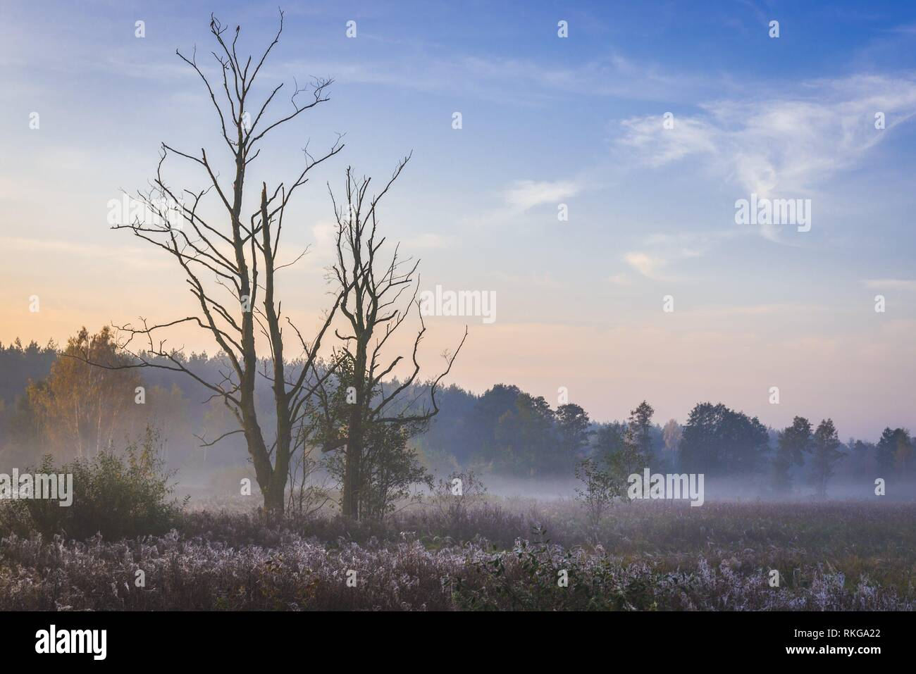 Morning view of a meadow in Gorki village, Sochaczew County on the edge of Kampinos Forest, large forests complex in Masovian Voivodeship of Poland. - Stock Image