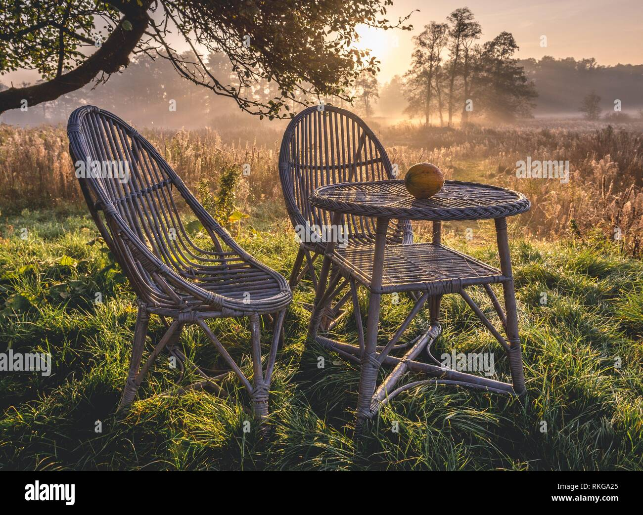 Morning in Gorki village, Sochaczew County on the edge of Kampinos Forest, large forests complex in Masovian Voivodeship of Poland. - Stock Image