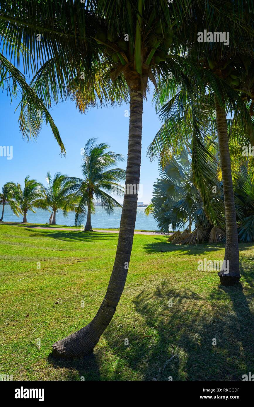 Cancun Pok-Ta-Pok palm trees in Hotel Zone at Nichupte Lagoon of Mexico. Stock Photo