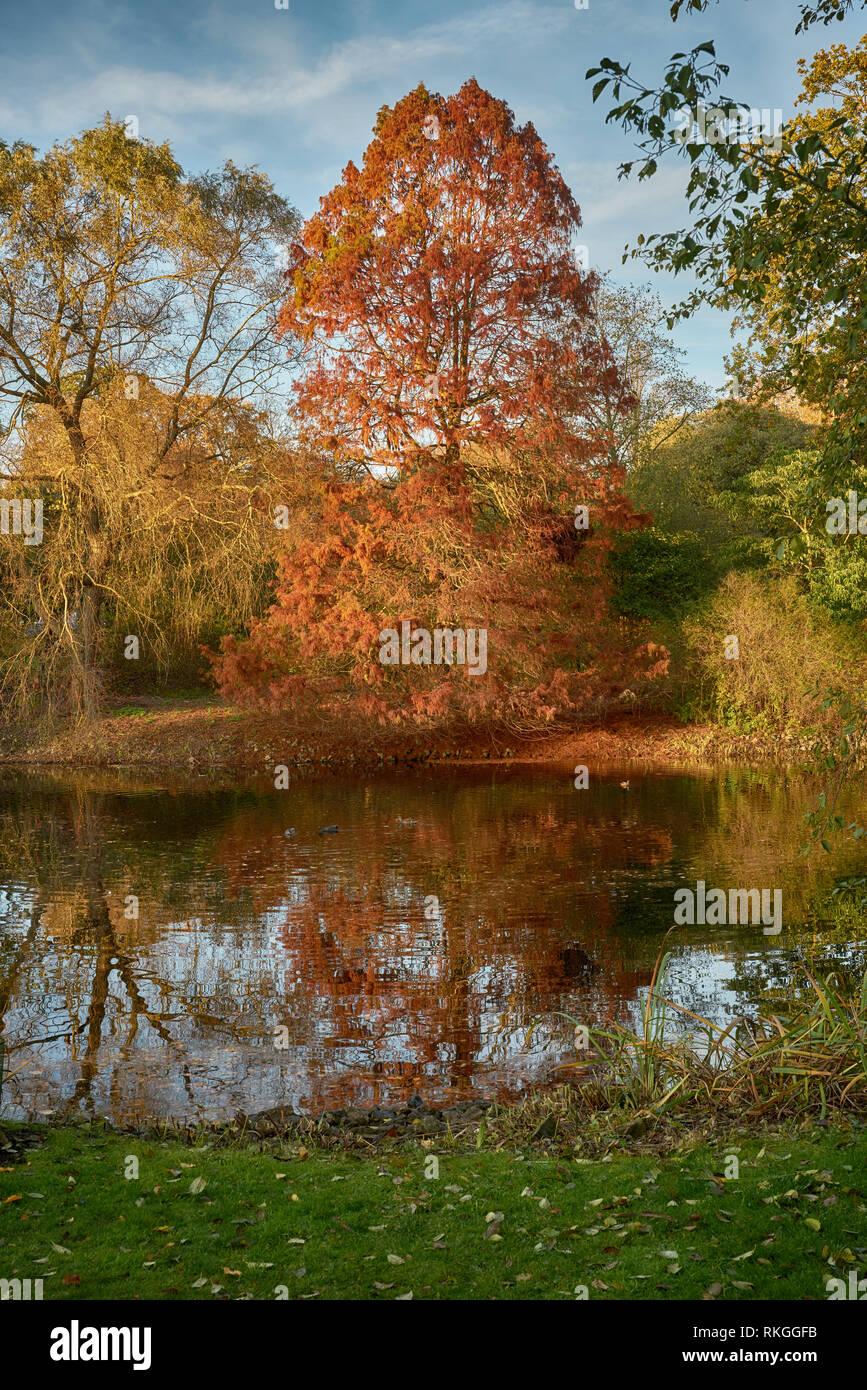 kew gardens autumn Stock Photo