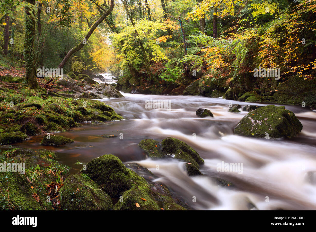 River Erme near Ivybridge in autumn Dartmoor national park Devon Uk - Stock Image