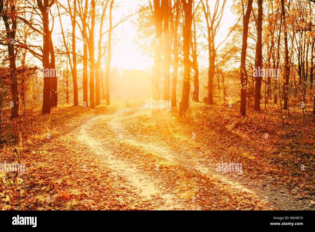Winding Countryside Road Path Walkway Through Autumn Forest. Sunset Sunrise. Nobody. Road Turns To Rising Sun. - Stock Image