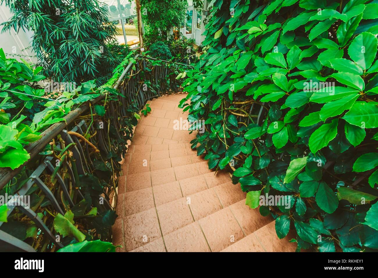 Greenhouse With Flowers And Plants. Temperate House Conservatory, Botanical Gardens. - Stock Image