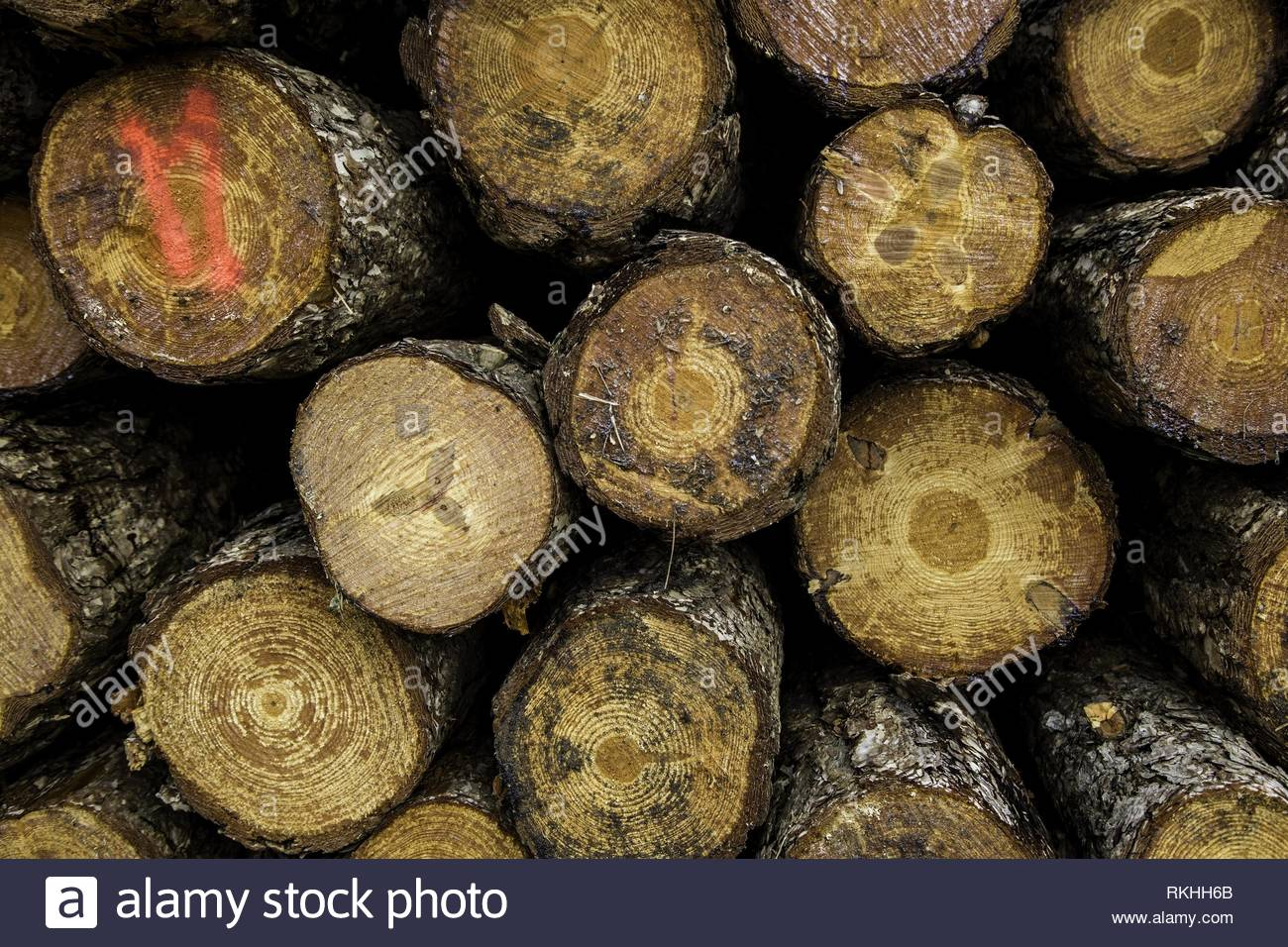 Cut timber trunks, detail of ecological disaster. - Stock Image