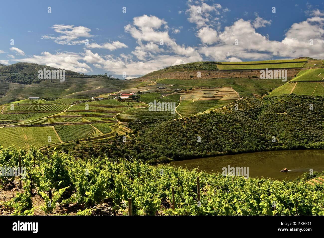 Vineyards in the port wine region Alto Douro, Pinhao, Douro Valley, Portugal - Stock Image