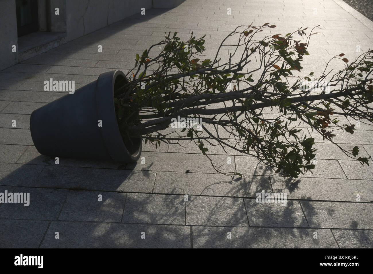 a potted plant fallen on paved street Stock Photo