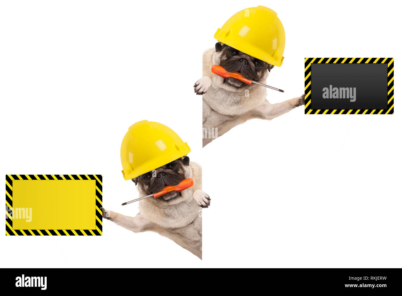 frolic mechanic construction worker pug dog with constructor helmet, holding orange screwdriver and blank yellow and black sign board, isolated on whi Stock Photo