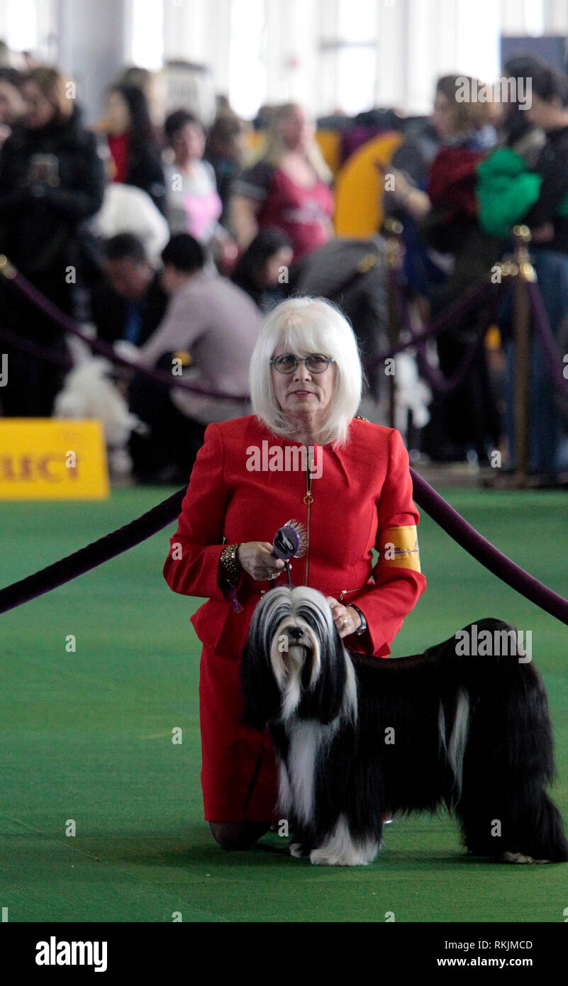 New York, United States. 11th Feb, 2019. Westminster Dog Show - New York City, 11 February, 2019: Handlers with Tibetan Terriers as they await judging during the Best of Breed Competition at the 143rd Annual Westminster Dog Show in New York City/ Credit: Adam Stoltman/Alamy Live News Stock Photo