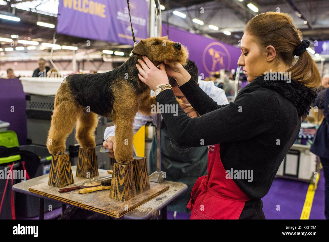 New York City, USA -February 11, 2019: Westminster Dog Show, New York City. Credit: Valery Rizzo/Alamy Live News Stock Photo