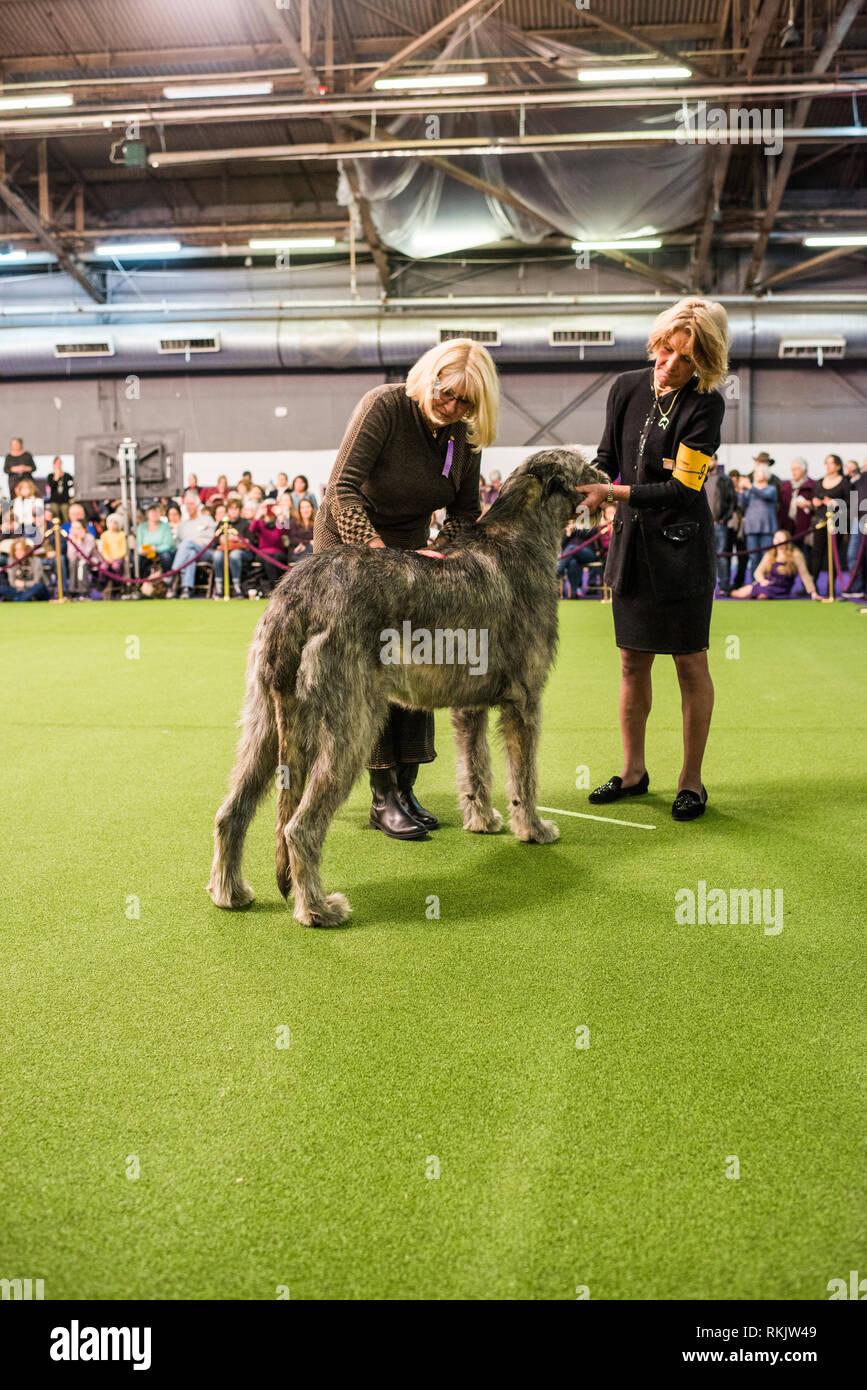 New York City, USA -February 11, 2019: Westminster Dog Show, New York City. Credit: Valery Rizzo/Alamy Live News Stock Photo
