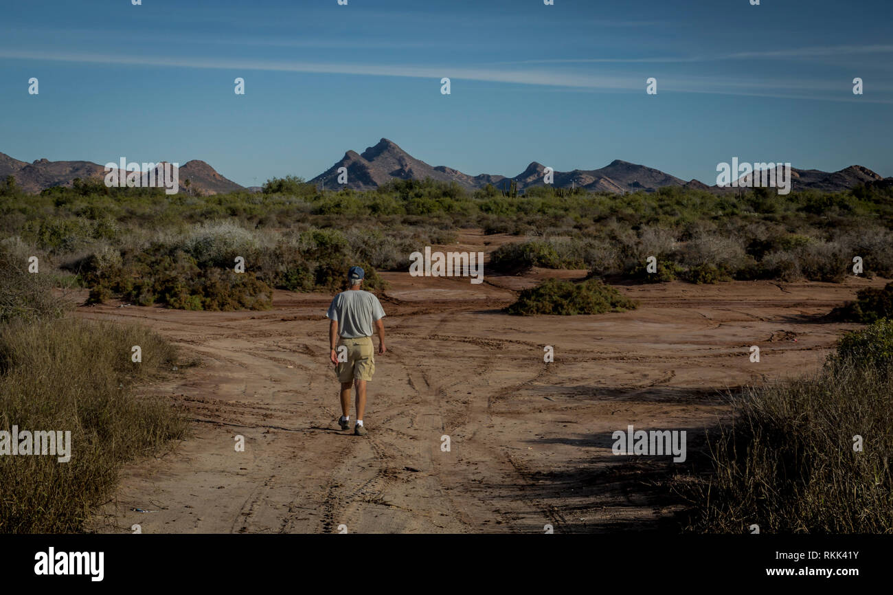 Man is walking on a path in the Sonora Desert near Mount Tetakawi, northwest coast of Mexico. - Stock Image