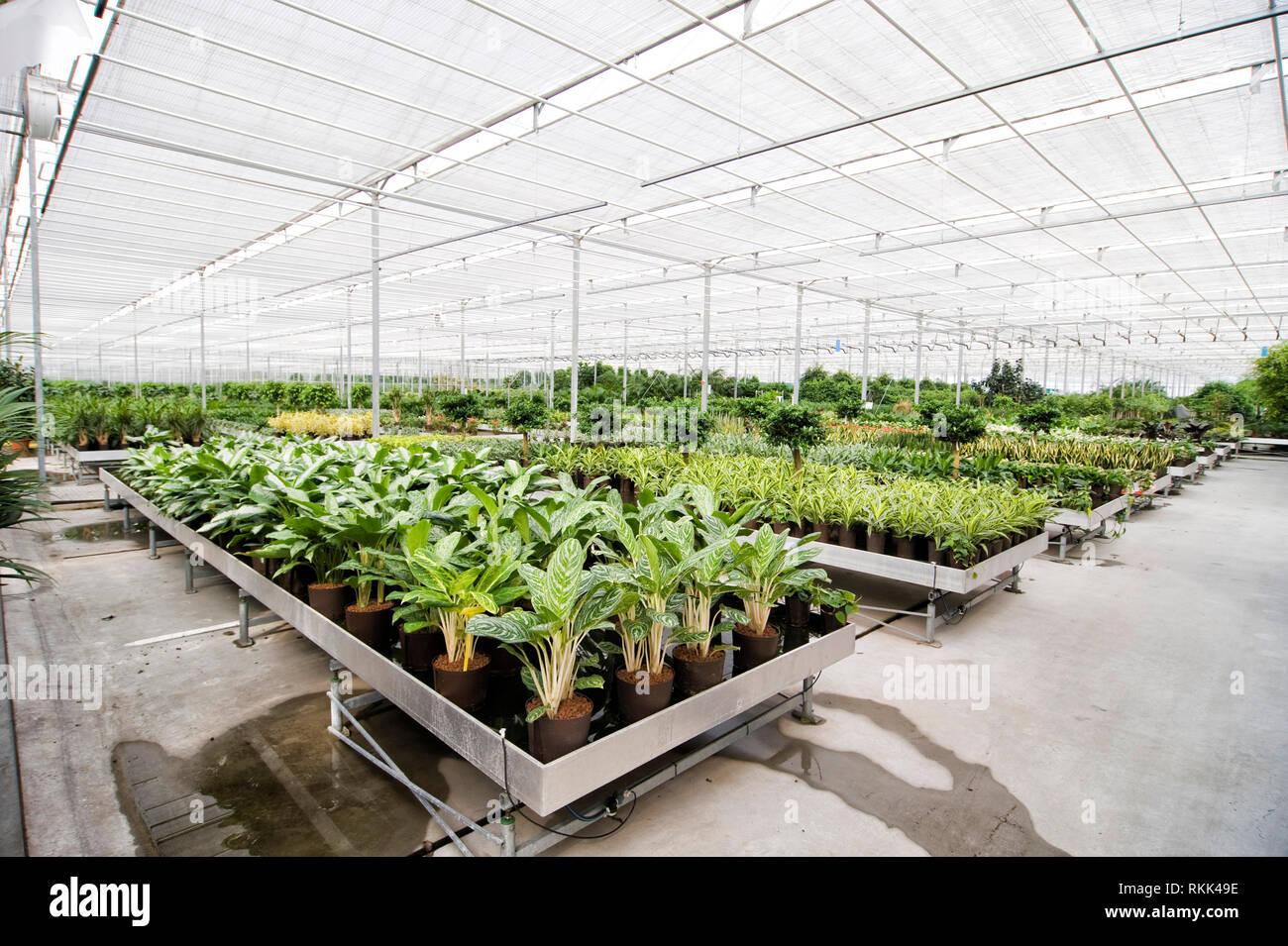 Gewaechshaus fuer Hydrokulturpflanzen das selber Energie erzeugt. [ - Stock Image