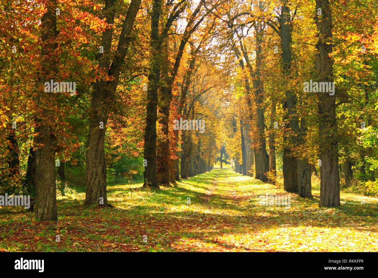 Autumn park with beautiful trees covered yellow and red foliage. Seasonal specific. Multicolored trees with path in autumn park. - Stock Image