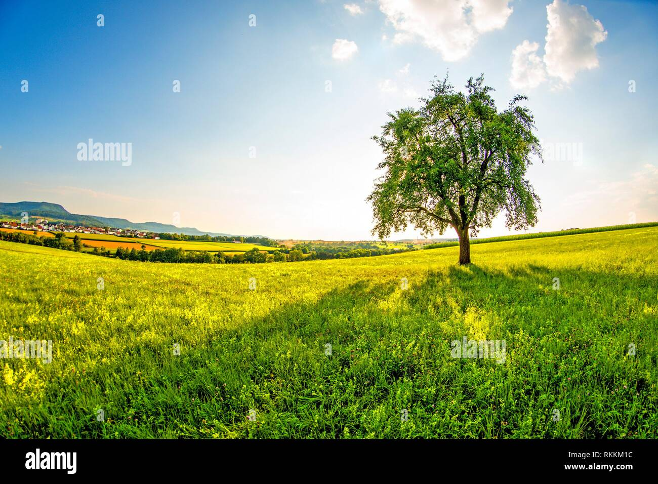 landscape with meadow, tree and view to the German highlands Swabian Alb. - Stock Image