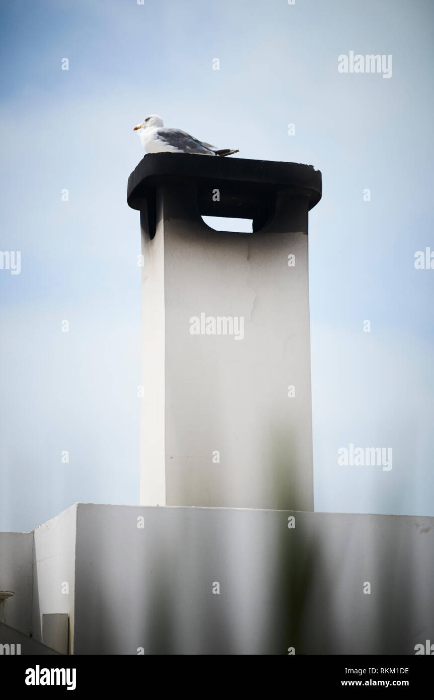 A seagull sitting resting on top of a chimneystack covered in soot, in Essaouira, Morocco. - Stock Image