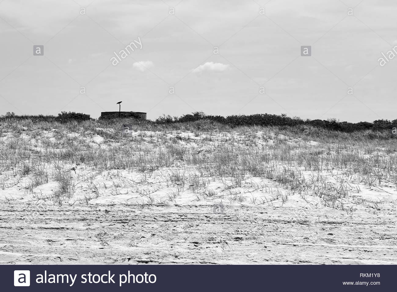 An Australian raven(Corvus coronoides), sits symbolically on a distant post atop a water reservoir, behind the sand dunes of the beach north of Iluka. - Stock Image