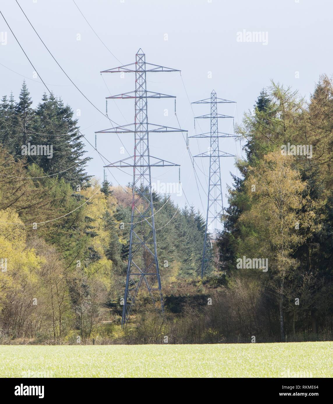 Large electric pylons splitting the dutch forrest. - Stock Image