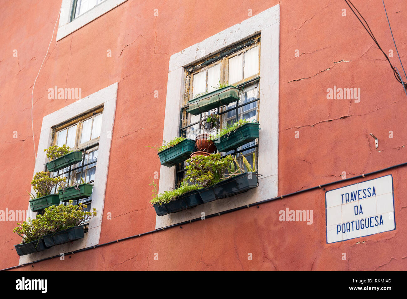 Lisbon, Portugal - 01/03/19: Window succulent boxes and plant boxes, pot plants. Old red building, white window frames, Rusty ancient window frame wit - Stock Image