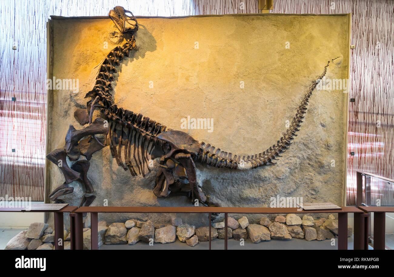 Quarry Exhibit Hall, Dinosaur National Monument, Utah, Usa, America. - Stock Image