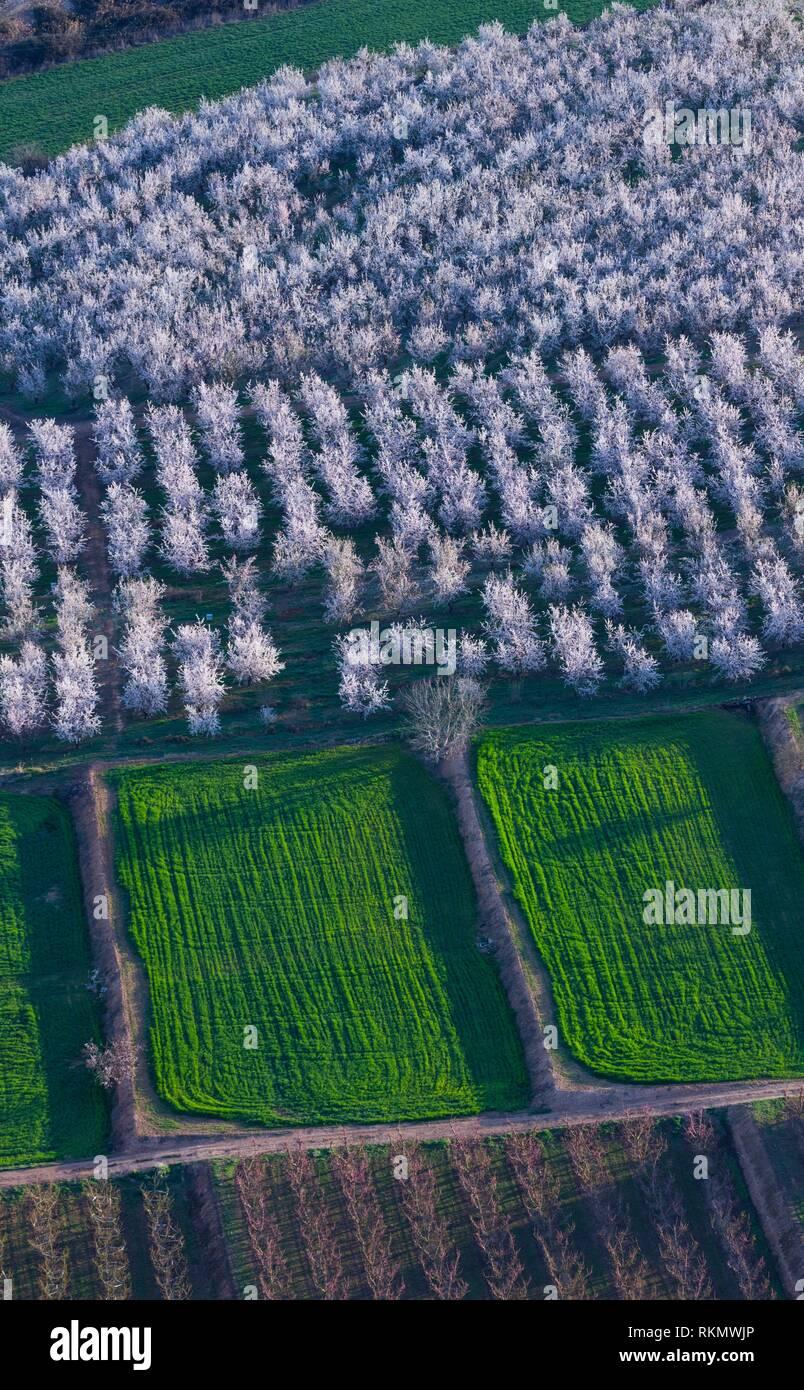 Flowering, fruit tree, Fruiturisme, Tourism Experience, Aitona village, Baix Segre, Lleida, Catalonia, Spain, Europe. - Stock Image
