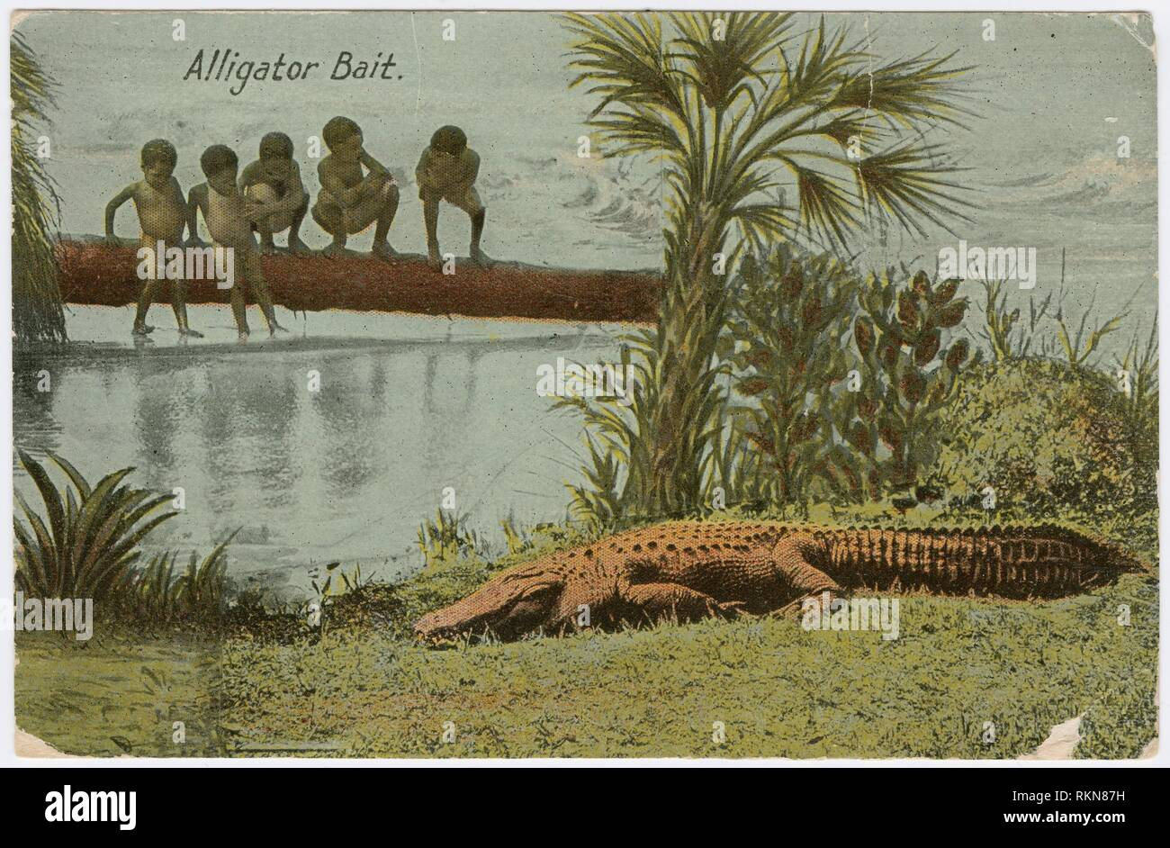 '''''Alligator Bait'' - postcard to Frederick Hoeing. Hoeing, Frederick (Addressee). Material culture collection Postcards. Date Created: 1910 - 1919 - Stock Image