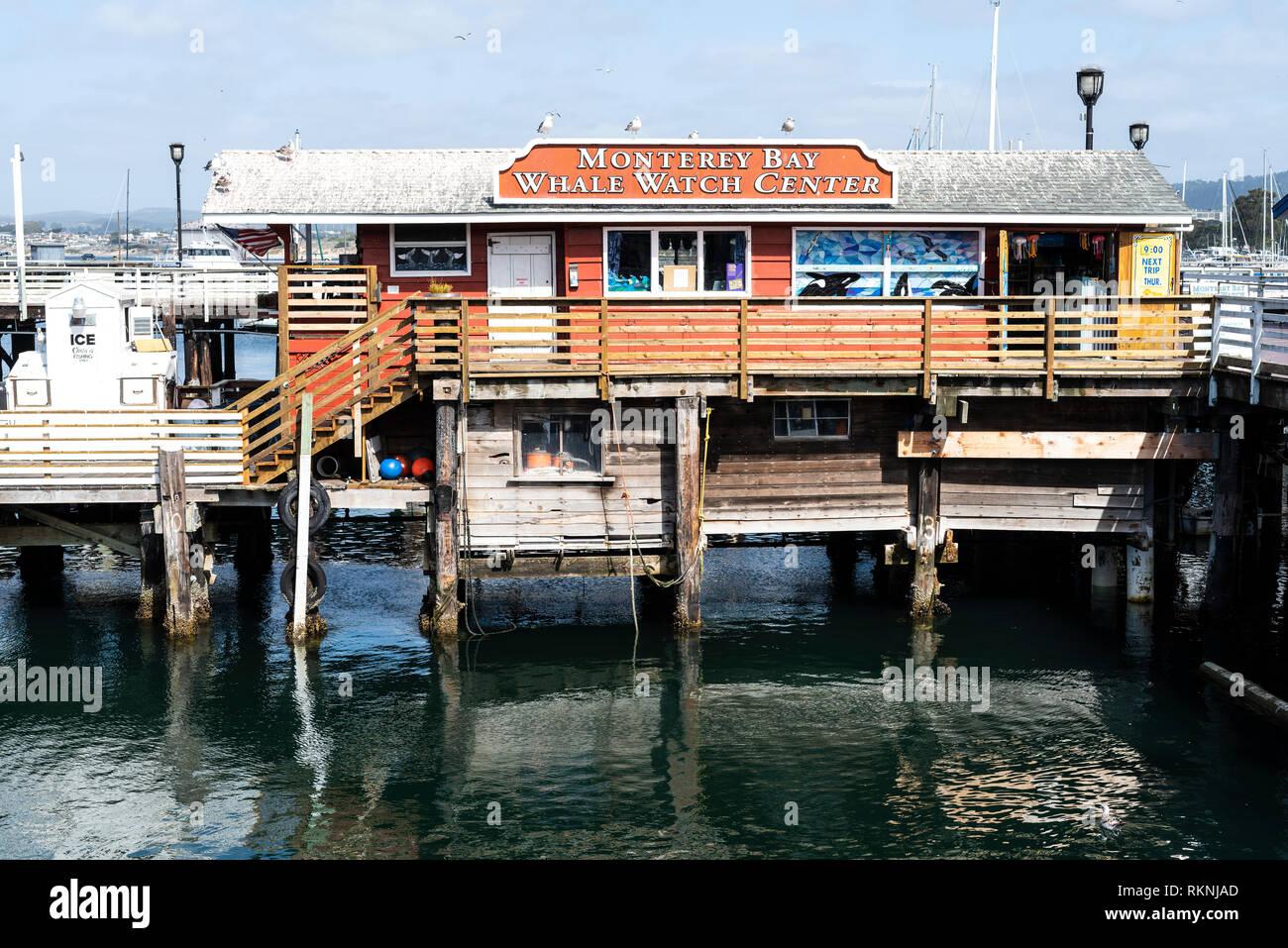 Whale Watching Monterey California - Stock Image