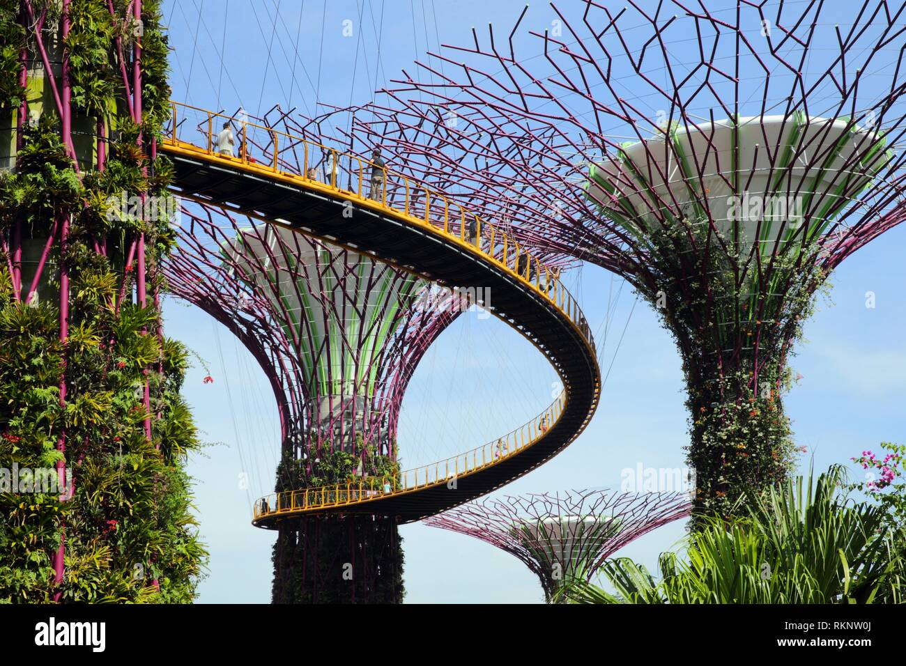 People walking along the skywalk that connects the iconic tree-like vertical gardens with large canopies, Supertree Grove, Botanic Garden, Garden by - Stock Image