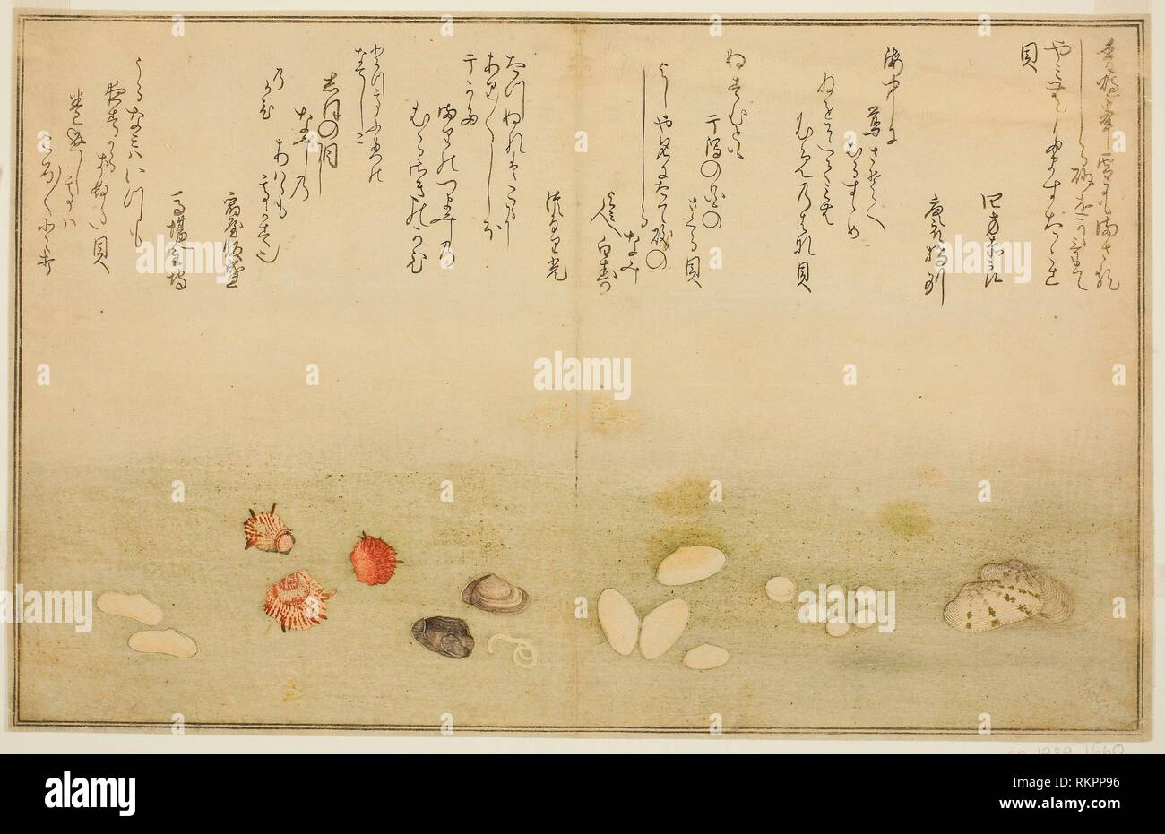 Sudare-gai, hana-gai, sakura-gai, mumeno-gai, nadeshiko-gai, and kinuta-gai, from the illustrated book ''Gifts from the Ebb Tide (Shiohi no tsuto)'' - Stock Image