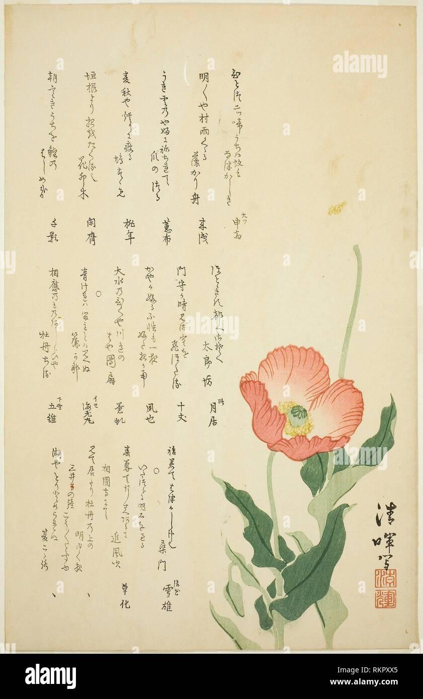 Two Poppies - c. early 1820s - Yokoyama Seiki Japanese, 1793-1865 - Artist: Yokoyama Seiki, Origin: Japan, Date: 1820-1824, Medium: Color woodblock - Stock Image