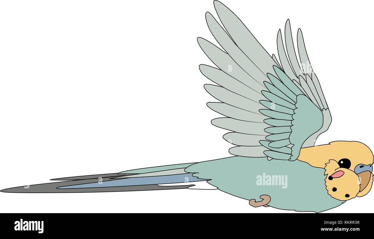 vector cartoon animal clip art flying budgerigar Stock Vector
