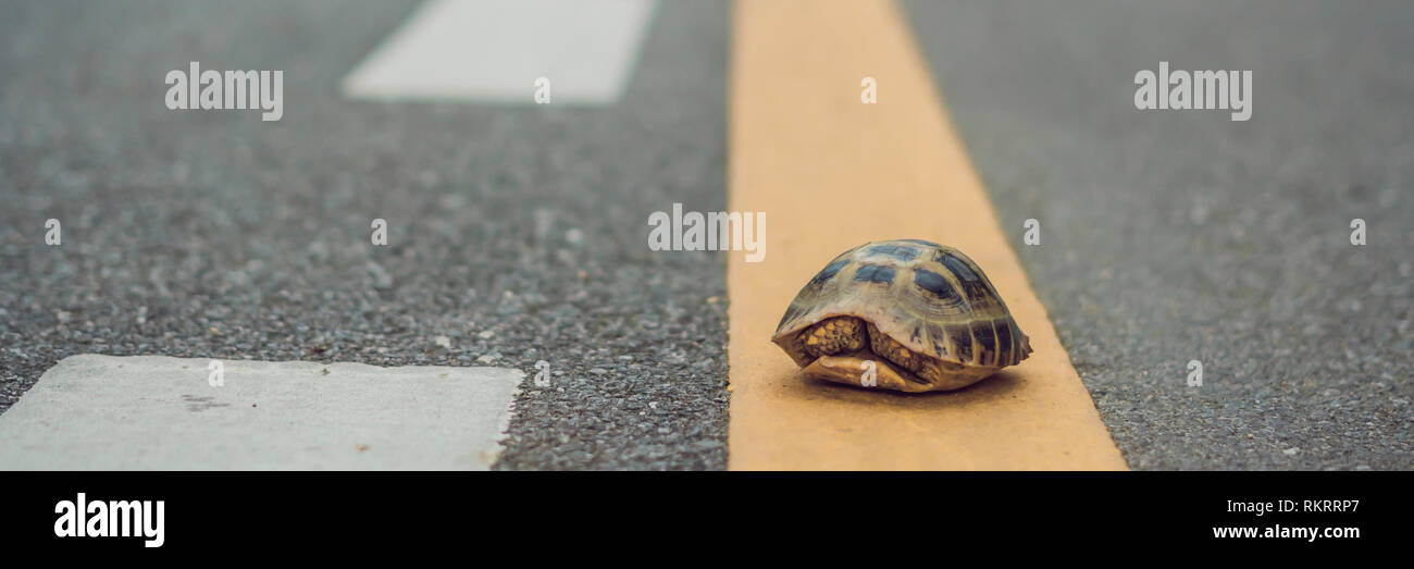 turtle walking down a track for running in a concept of racing or getting to a goal no matter how long it takes BANNER, long format - Stock Image