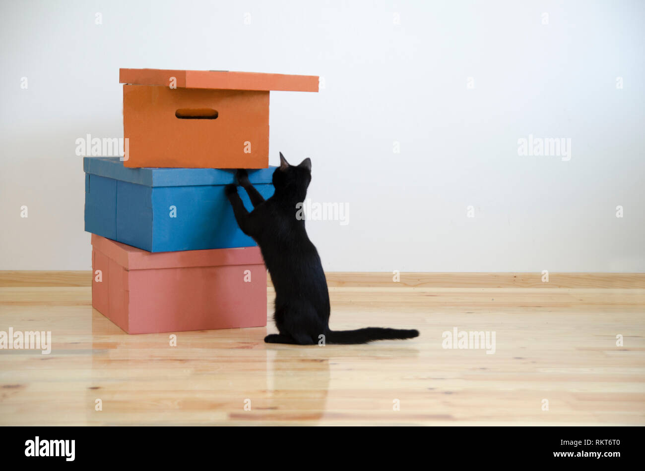 Moving In New Home Concept Cardboard Boxes And Black Cat In