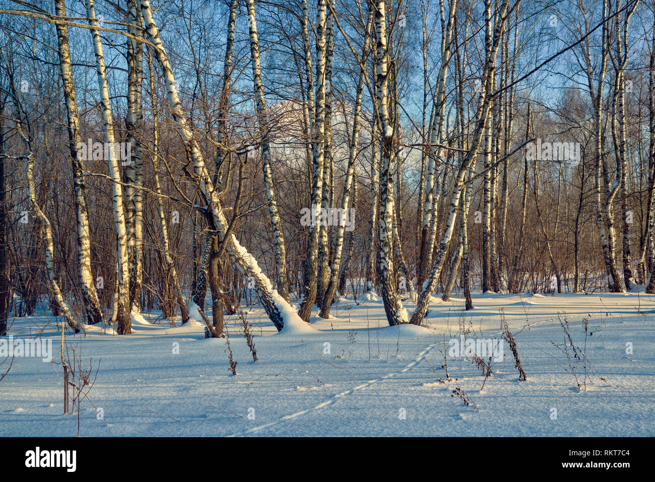 Scenic image of spruces tree. Frosty day, calm wintry scene. Ski resort. Explore the beauty of earth. Country house in winter weather, a lot of snow a - Stock Image