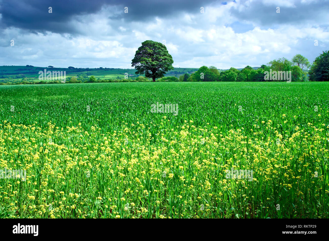 A sunny view of the fertile landscape in Pembrokeshire, Wales. - Stock Image