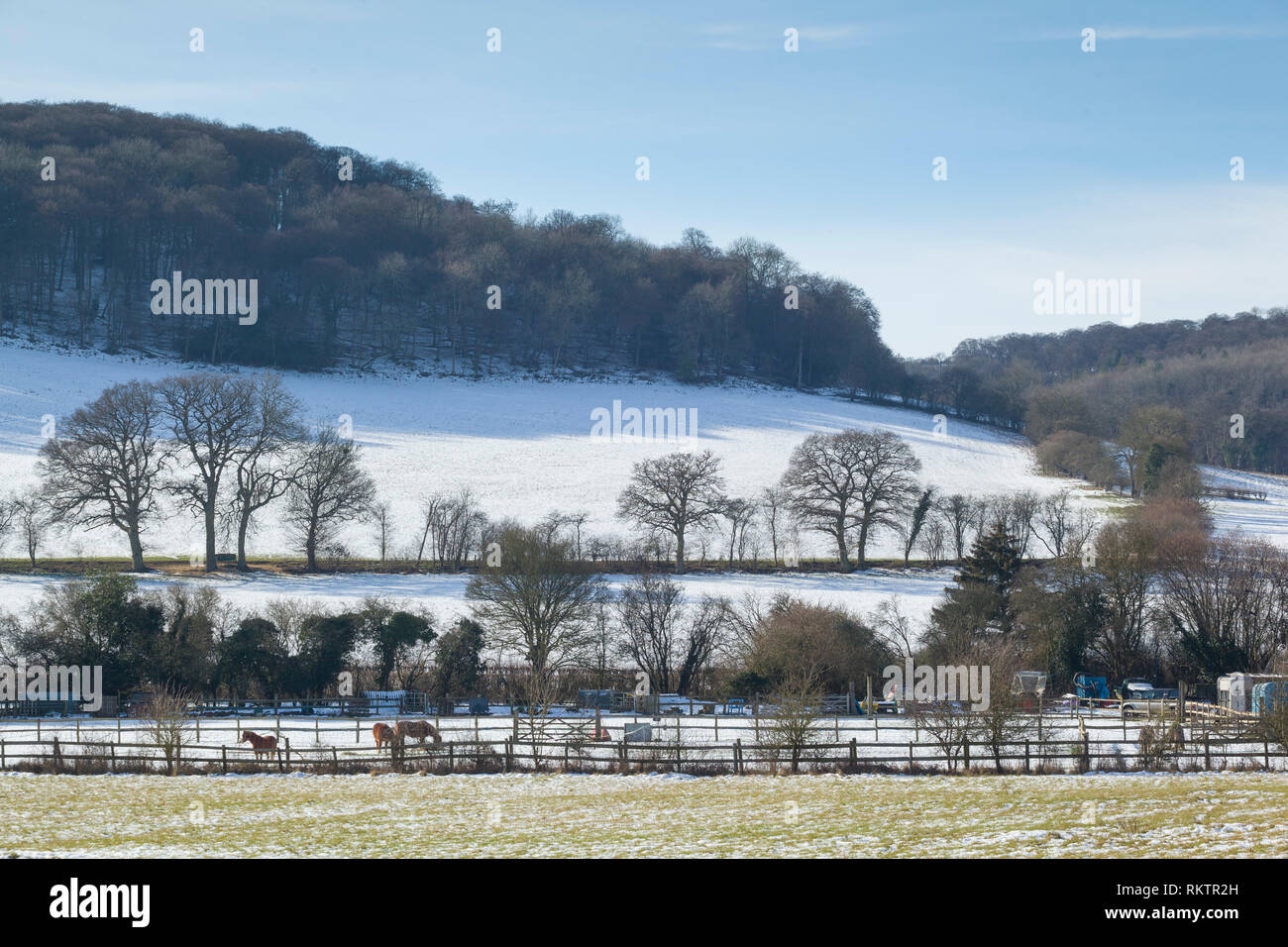 Horses graze in snow covered fields near Turville, Buckinghamshire. - Stock Image