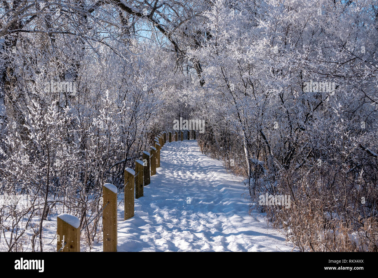 A snow covered walking trail in the woods in the Inglewood bird sanctuary in Calgary, Alberta, Canada Stock Photo